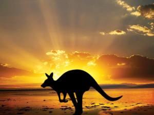 Collette-Guided-Tours-Travis-Paquin-Our-Travel-Team-Australia-New-Zeland-Fiji Kangaroo-shot